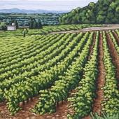 Vineyard at Mont Redon